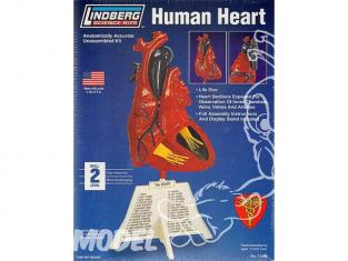 Lindberg maquettes educative 71309 Coeur Humain 1/1