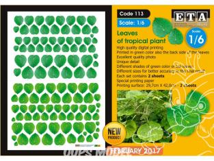 ETA diorama 113 Imprimé Feuilles de plantes tropicales - Piper peltatum 1/6