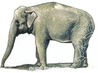 CMK Personnage resine F48341 Un Eléphant d'Asie 1/48
