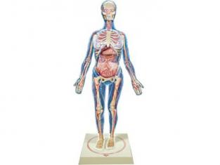 LINDBERG maquette 76013 Le corps humain Femme