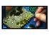 Vallejo Touffe fantaisie SC433 Turquoise hauteur de l'herbe 6mm