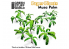 Green Stuff 508734 Plantes en Papier Arbre Musa 1/48 - 1/35 - 1/32