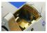 EDUARD photodecoupe 49457 INTERIEUR TBF-1 1/48