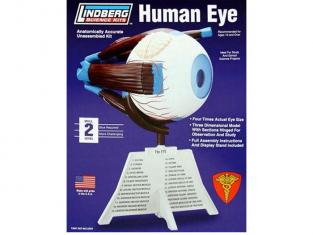 Lindberg maquettes educative 71307 Oeil humain