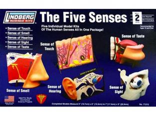 Lindberg maquettes éducative 71315 Les cinq Sens